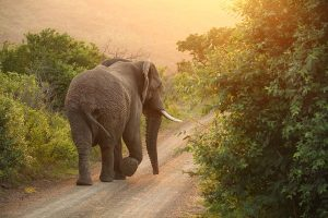 travel photography Africa