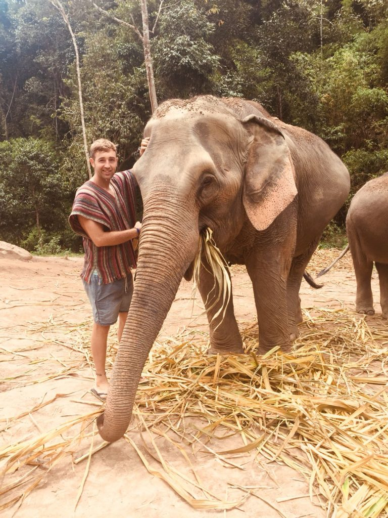 elephant nature park, elephant jungle sanctuary, elephant sanctuary chiang mai, chiang mai elephant sanctuary, elephant sanctuary, elephant nature park chiang mai, elephant jungle sanctuary chiang mai, elephant chiang mai, best elephant sanctuary chiang mai