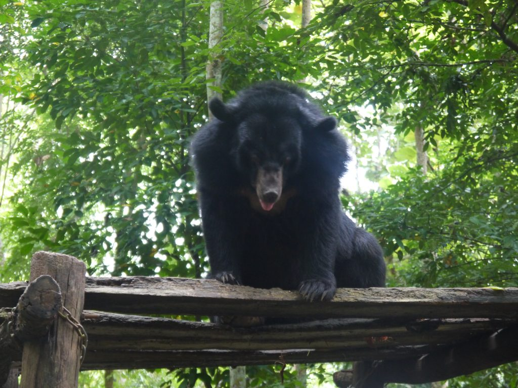 how to do the Kuang Si Falls in Luang Prabang bear sanctuary