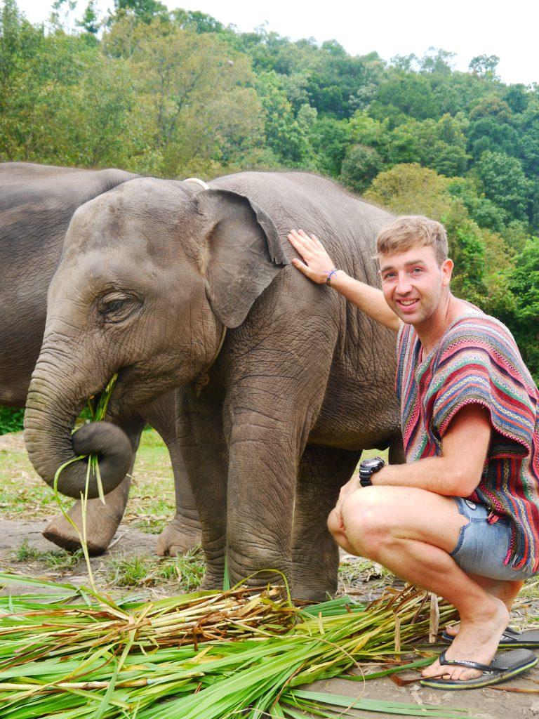 elephant sanctuary chiang mai, chiang mai elephant sanctuary, elephant jungle sanctuary chiang mai, best elephant sanctuary chiang mai, ethical elephant sanctuary chiang mai, sanctuary elephant chiang mai, best elephant sanctuary in chiang mai, elephant sanctuary thailand chiang mai, chiang mai elephant sanctuary reviews