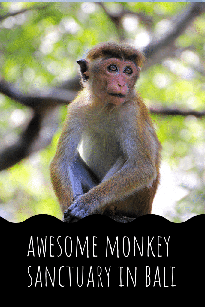 monkey forest ubud bali,monkey forest bali,monkey forest bali cost,ubud monkey forest bali ,sacred monkey forest bali ,bali ubud monkey forest ,monkey forest bali ubud, monkey forest bali entrance fee