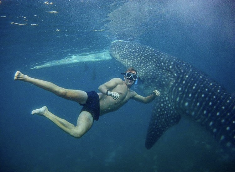 oslob cebu, oslob, oslob philippines, oslob whale sharks, oslob whale shark, safari resort oslob, oslob cebu philippines, whale sharks oslob, whale shark oslob