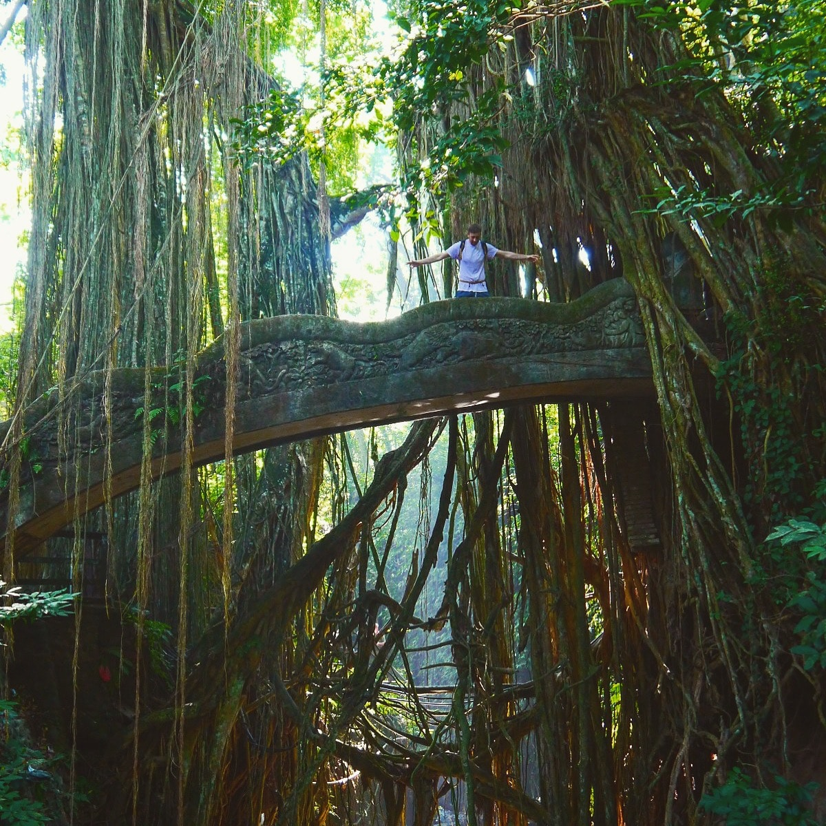 monkey forest bali, ubud bali monkey forest,monkey forest bali cost,ubud monkey forest bali ,sacred monkey forest bali ,bali ubud monkey forest ,monkey forest bali ubud,bali monkey forest ubud,monkey forest bali entrance fee, things to do in ubud, best things to do in ubud, top things to do in ubud, things to do in ubud bali, things to do in ubud at night, things to do in ubud blog, free things to do in ubud, things to do in ubud shopping, things to do in ubud tripadvisor, things to do in ubud centre