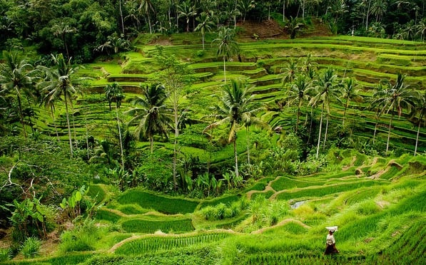 ubud rice terraces, rice terraces ubud, best things to do in ubud, best things to do in ubud bali, best things to do in ubud at night, best things to do in ubud bali bible, kamandalu ubud, ubud palace, ubud monkey forest, things to do in ubud, yoga barn ubud, what to do in ubud, yoga ubud