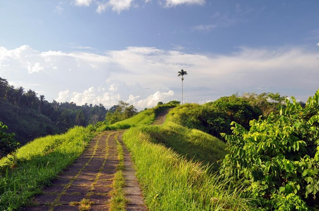 campuhan ridge walk, best things to do in ubud, best things to do in ubud bali, best things to do in ubud at night, best things to do in ubud bali bible, kamandalu ubud, ubud palace, ubud monkey forest, things to do in ubud, yoga barn ubud, what to do in ubud, yoga ubud
