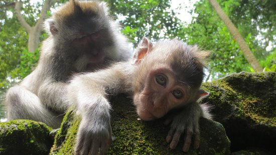 best things to do in Ubud, monkey forest bali, ubud bali monkey forest,monkey forest bali cost,ubud monkey forest bali ,sacred monkey forest bali ,bali ubud monkey forest ,monkey forest bali ubud,bali monkey forest ubud, things to do in ubud, best things to do in ubud, top things to do in ubud, things to do in ubud bali, things to do in ubud at night, things to do in ubud blog, free things to do in ubud, things to do in ubud shopping, things to do in ubud tripadvisor, things to do in ubud centre