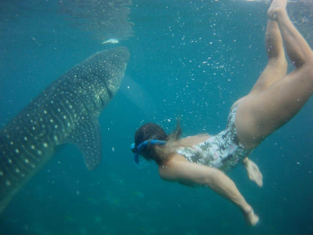 oslob whale sharks price and schedule
