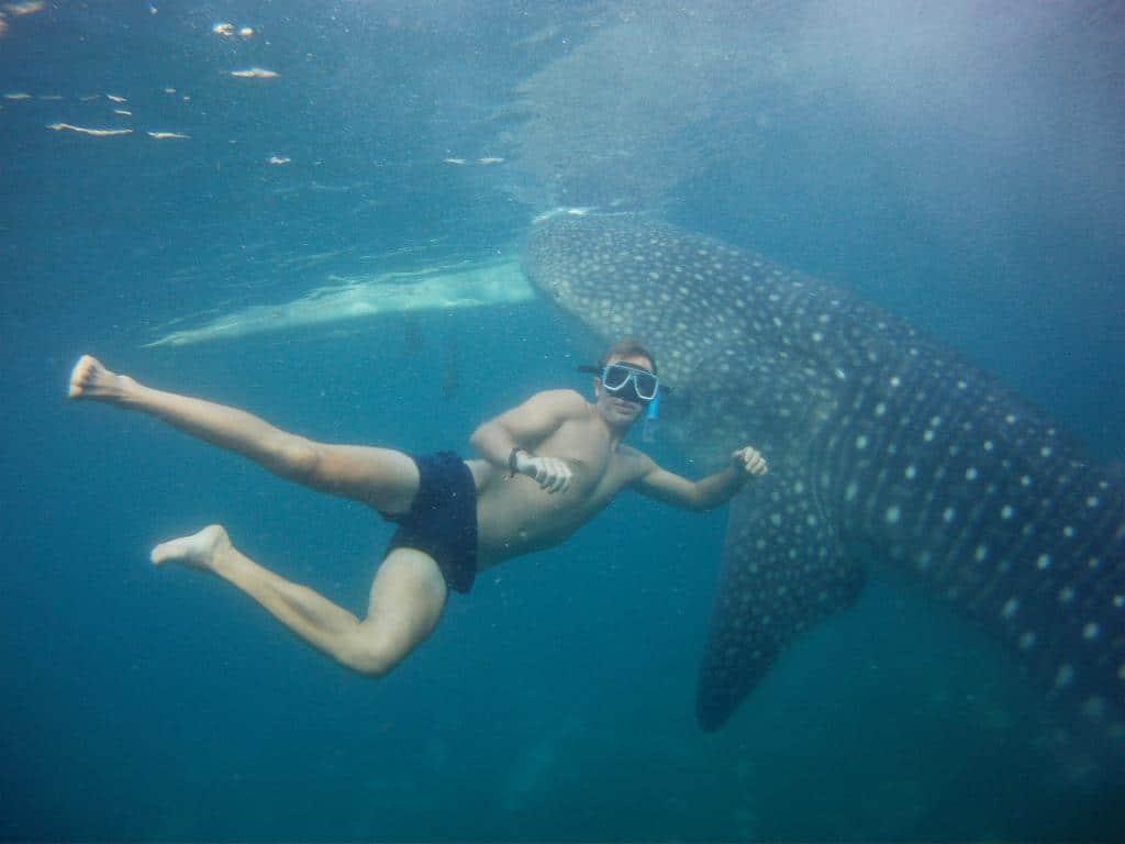 whale sharks, oslob whale sharks, whale sharks oslob, swimming with whale sharks, swimming with whale sharks cebu, whale sharks philippines, whale sharks cebu, whale sharks in oslob