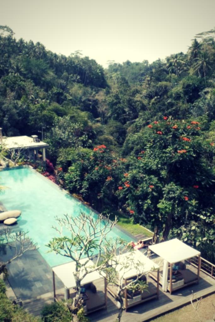 ubud, jungle, jungle fish, infinity pool, jungle fish ubud, ubud village, jungle fish bali, jungle bali, tiket the jungle, spa bali ubud