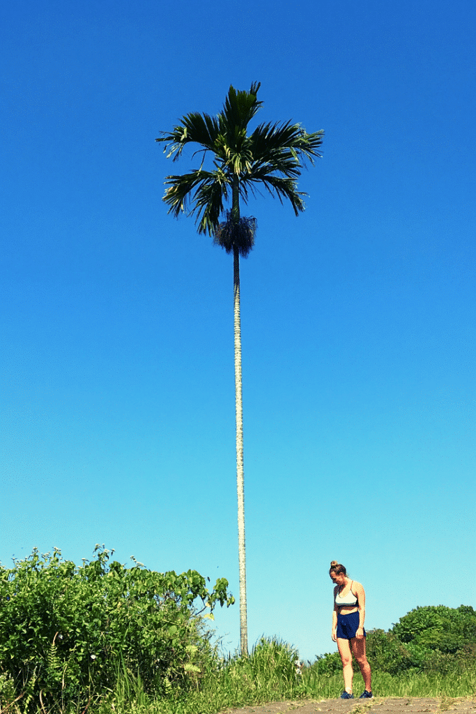 Campuhan ridge walk Ubud, bali photography, bali wedding photography, bali landscape photography, photography bali, bali culture photography, travel photography bali, bali photography tours, bali temple photography, bali beach photography