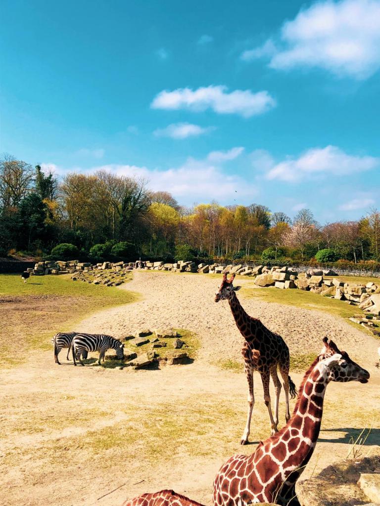 Dublin zoo, zoo in dublin, zoo Dublin, things to do with Kids In dublin