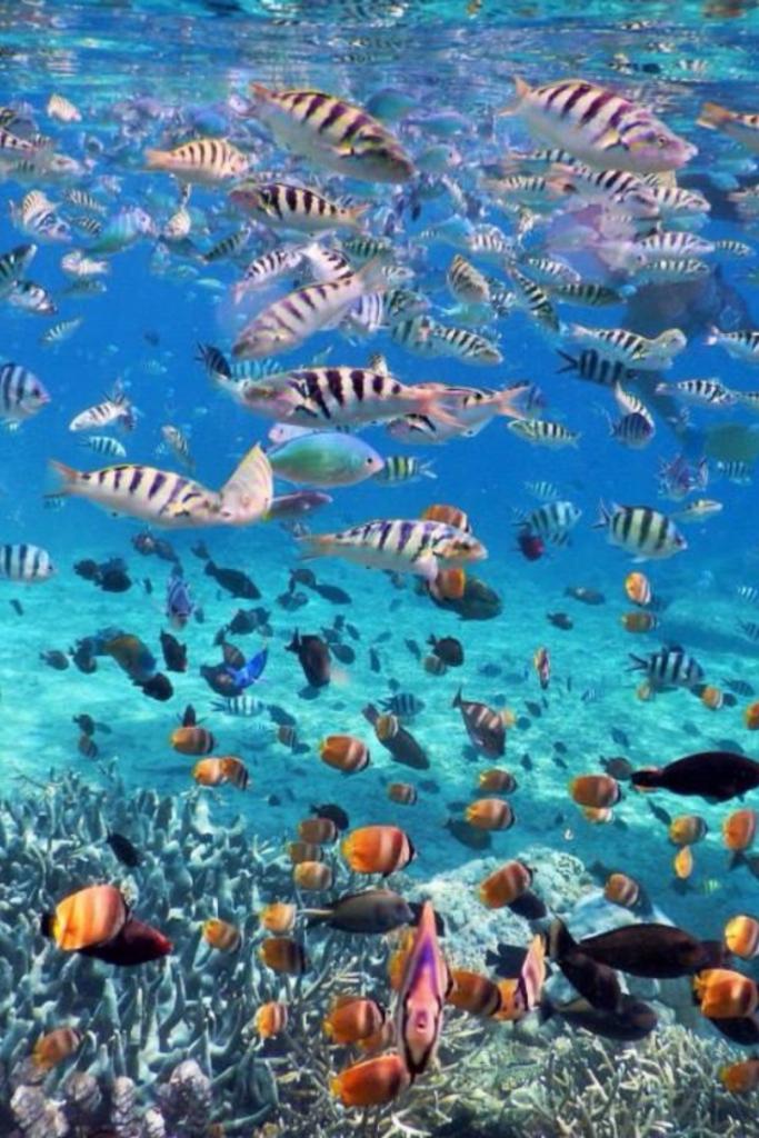 diving in Nusa Lembongan, surf nusa lembongan, nusa lembongan surf