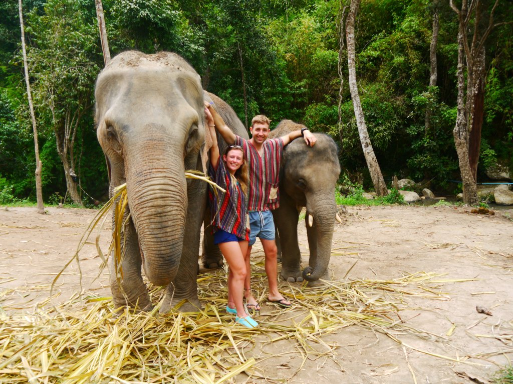 elephant nature park, elephant jungle sanctuary, elephant sanctuary chiang mai, chiang mai elephant sanctuary, elephant sanctuary, elephant nature park chiang mai, elephant jungle sanctuary chiang mai, elephant chiang mai, best elephant sanctuary chiang mai