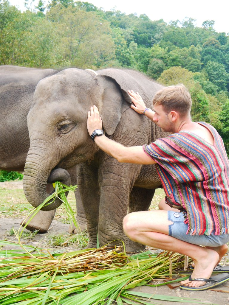 elephant sanctuary phuket, phuket elephant sanctuary, elephant jungle sanctuary phuket, green elephant sanctuary phuket, phuket elephant jungle sanctuary, green elephant sanctuary park phuket, elephant sanctuary thailand phuket, best elephant sanctuary phuket, phuket elephant sanctuary reviews