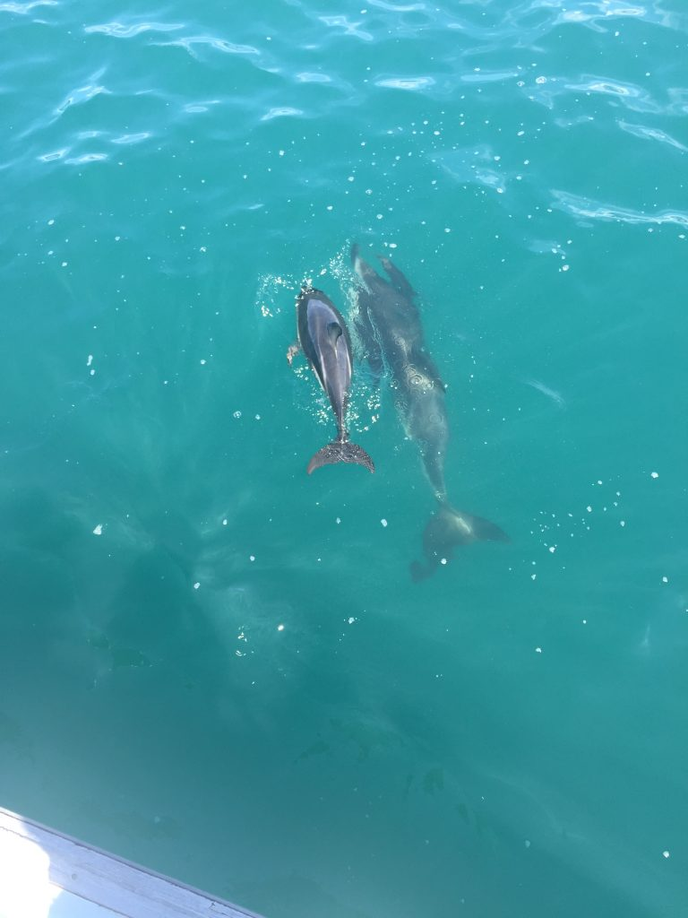 its worth the price for the dolphin experience in Kaikoura