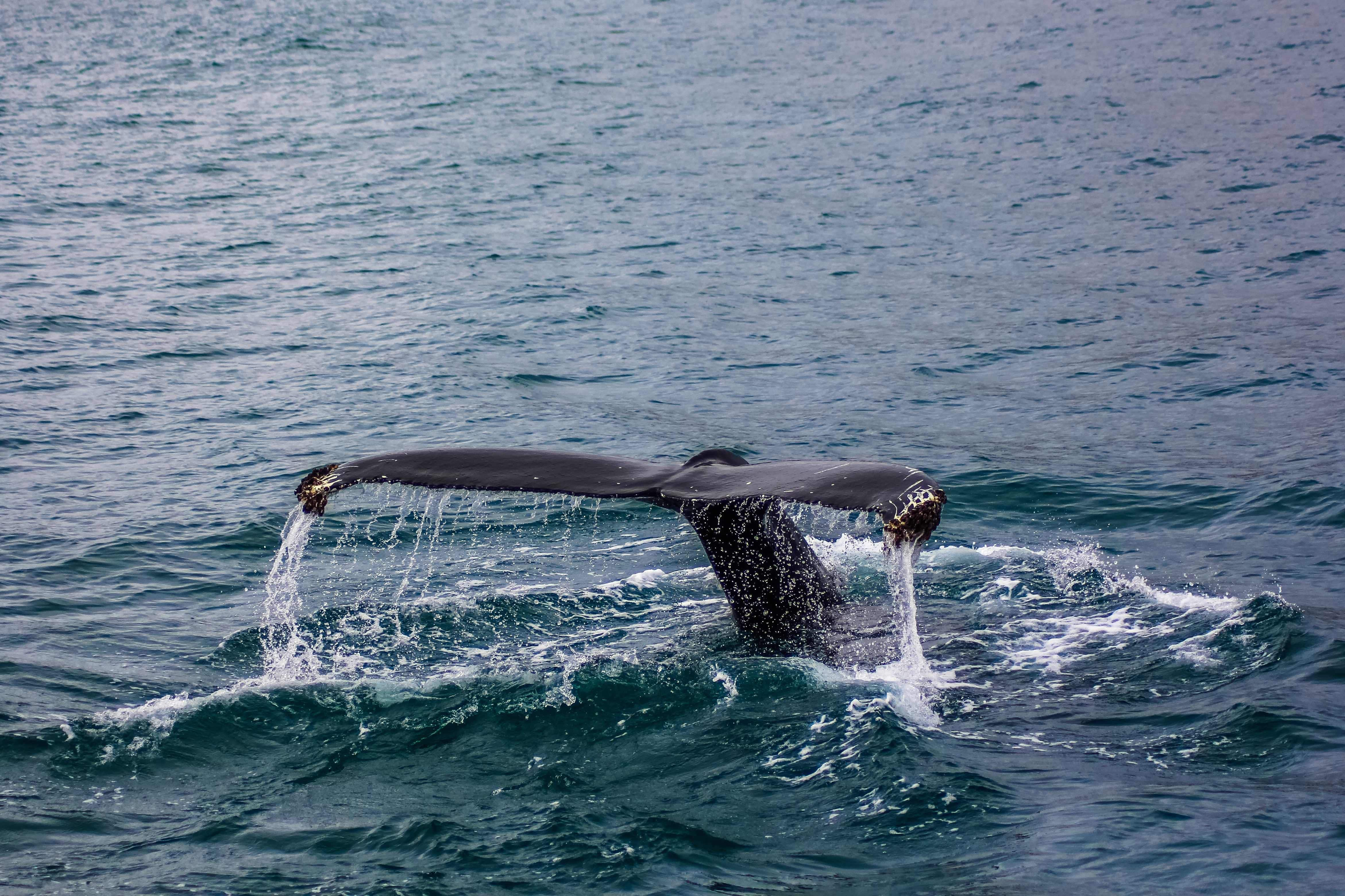 Whale watching by boat in Kaikoura