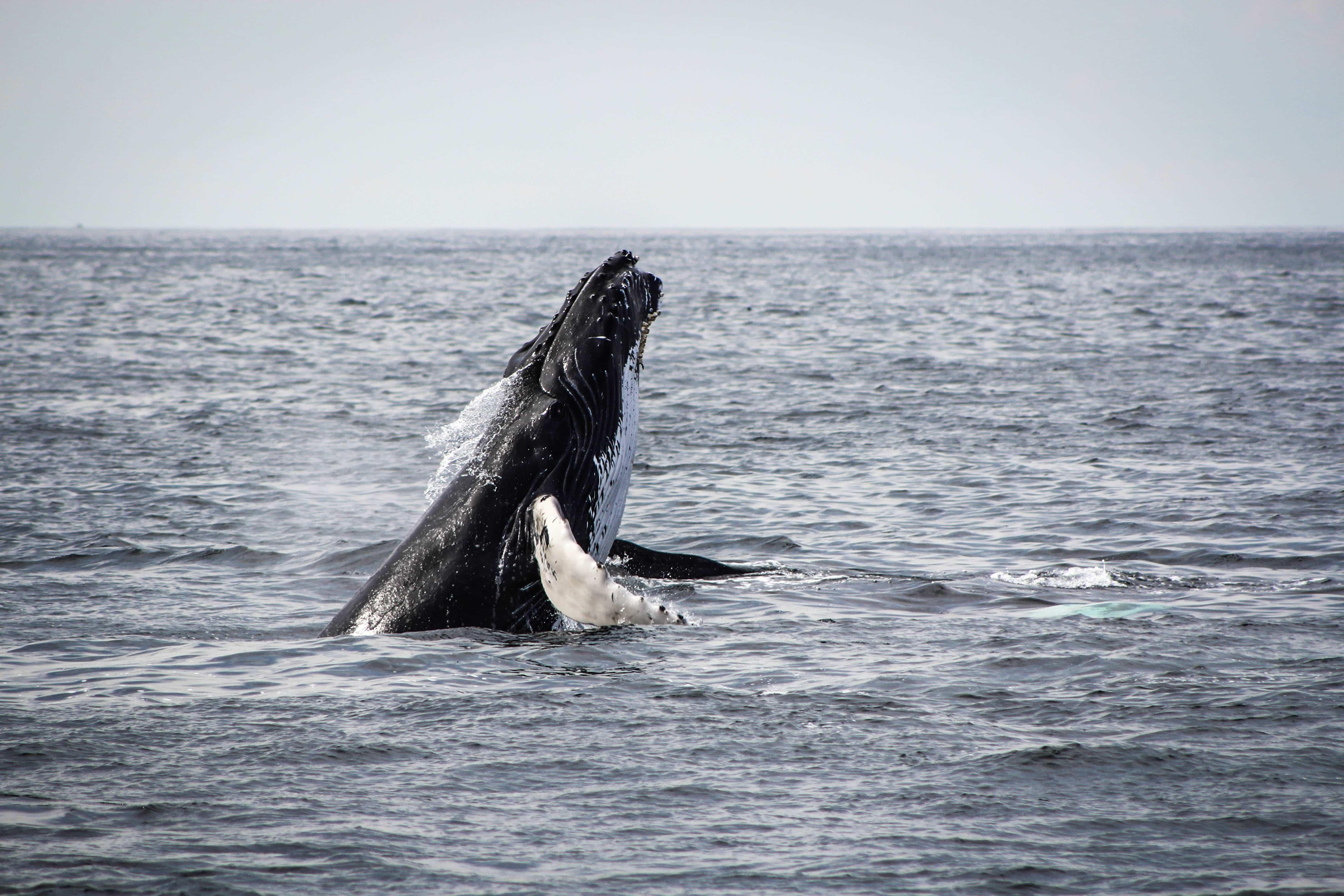 kaikoura, whale watch kaikoura, kaikoura whale watching, whale watching in kaikoura, kaikoura road, kaikoura whale watch, whale watching boat or plane?