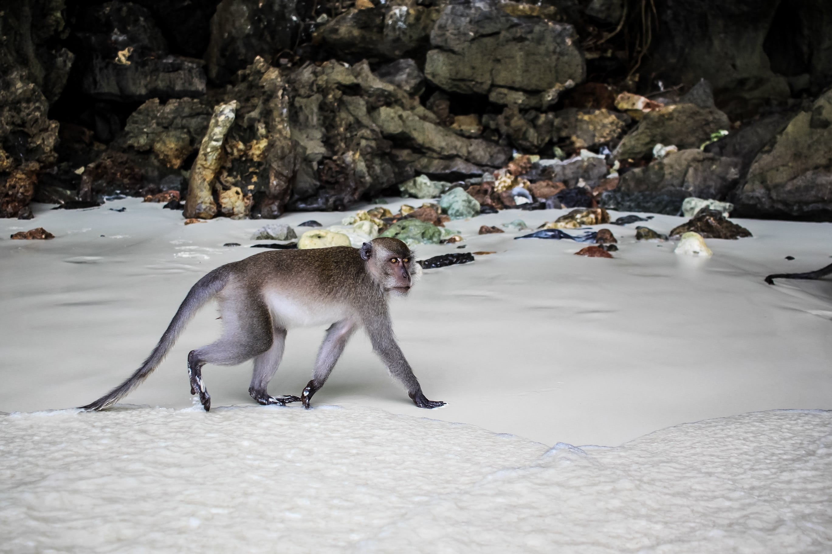 monkey beach phi phi, monkey beach thailand, monkey island phuket, monkeys in phuket, snorkeling koh phi phi, monkey beach koh phi phi, where to stay phi phi