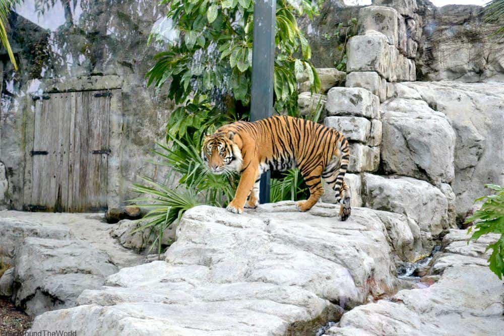 auckland zoo tickets, best things to do in Auckland