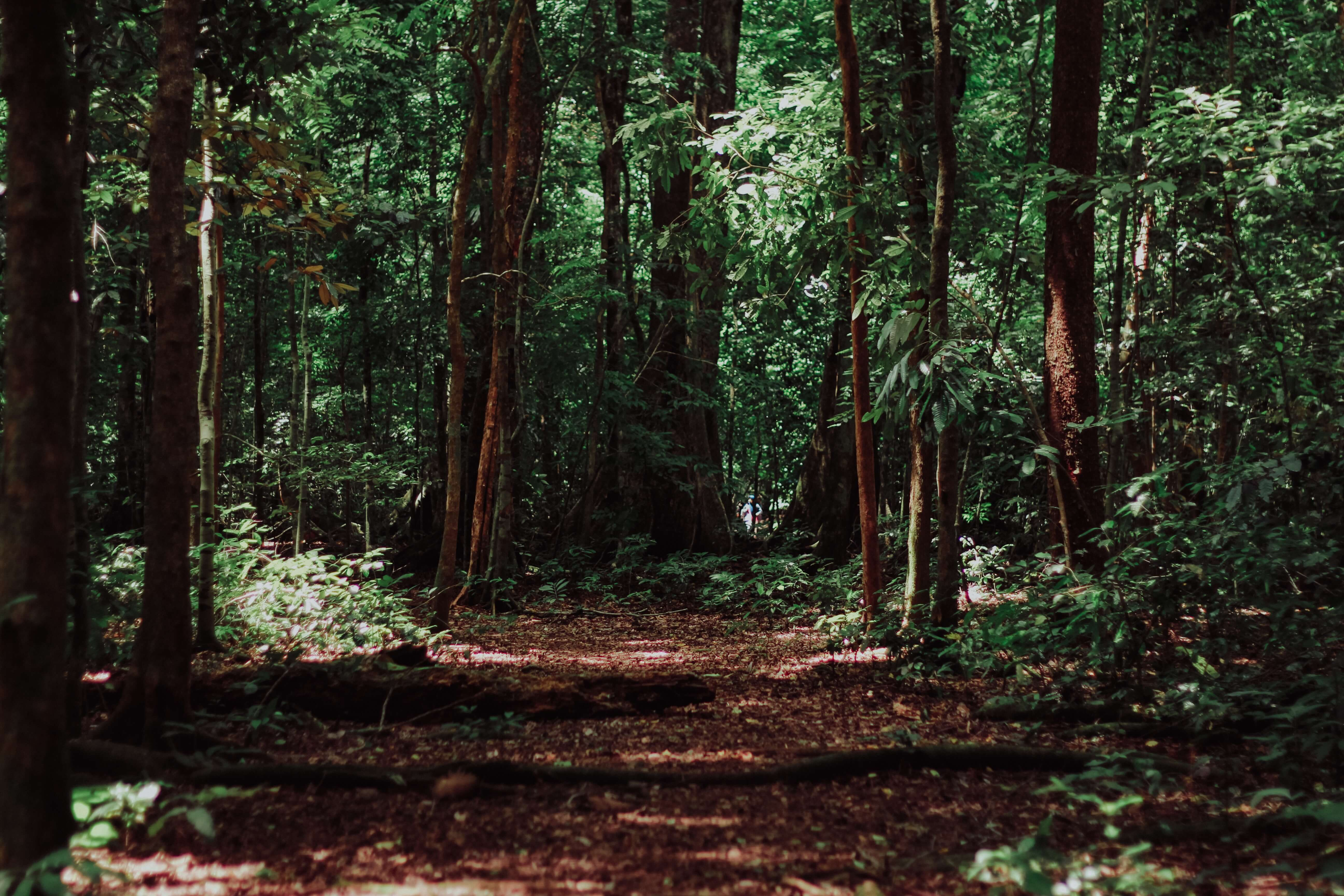 exploring the Bruce trail