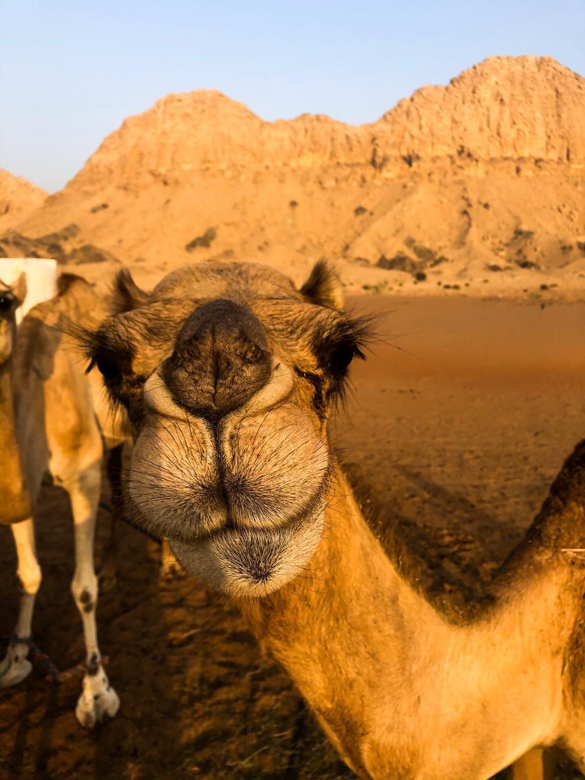 Dubai sand bashing itinerary