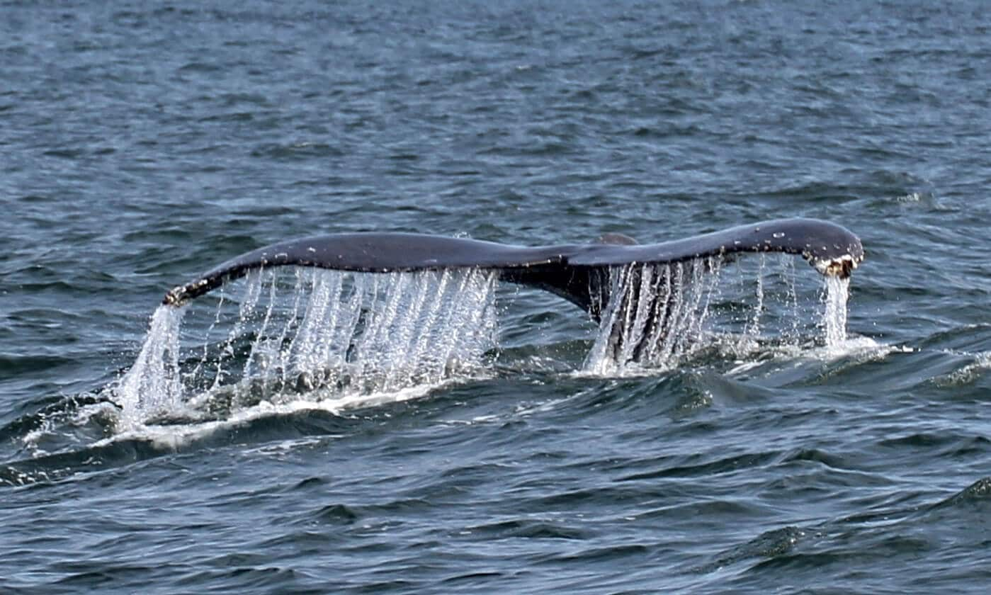 The amazing photo of full day tour whale watching Maui