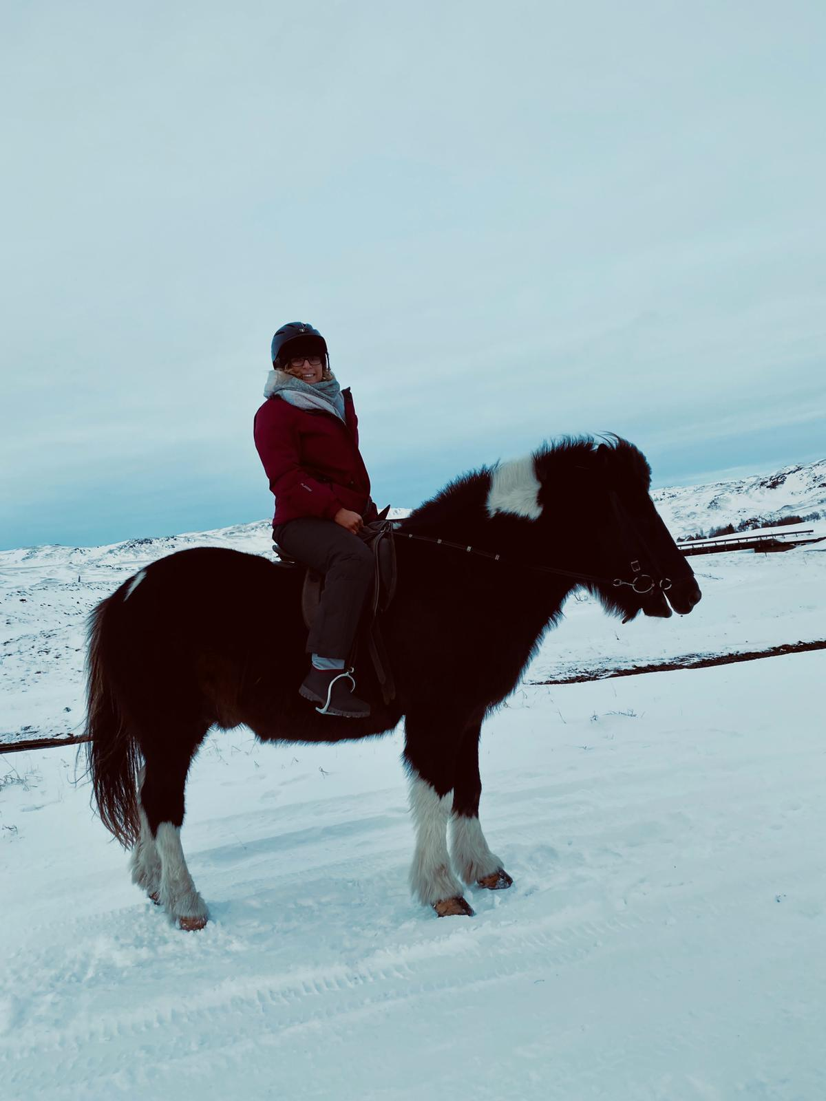 the viking horses iceland