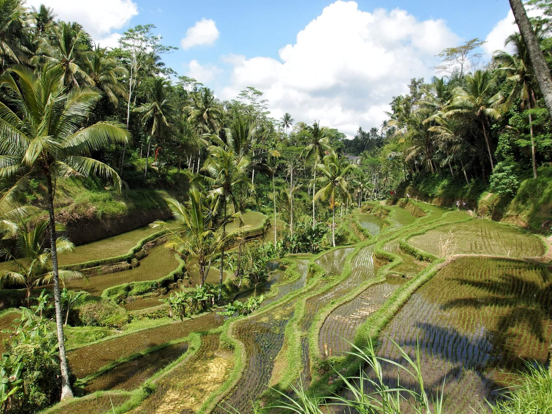 Ubud tour Bali itinerary