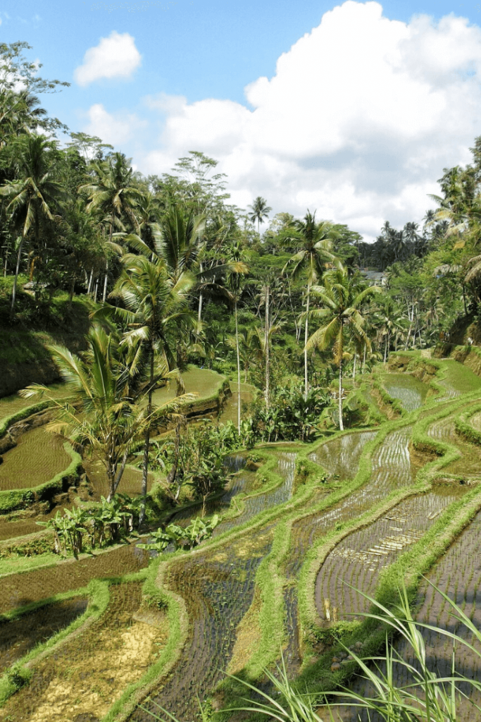 Private Ubud tour Bali itinerary