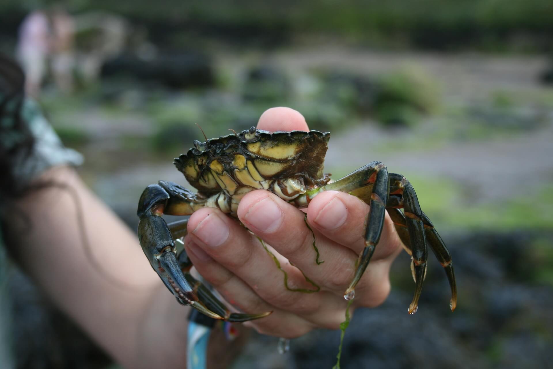 crabbiny whitby