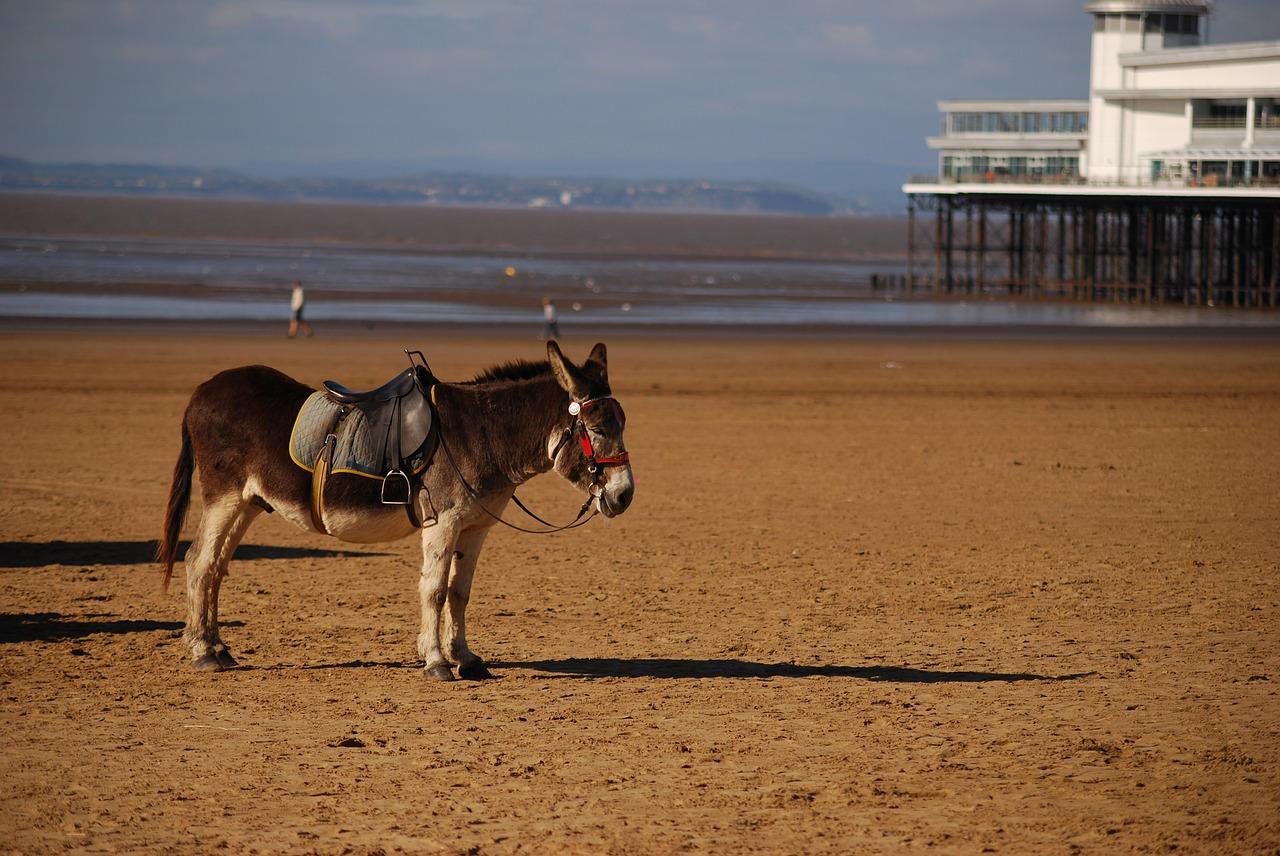 Beach Donkey Saddle Pier Summer - johnnyhypno / Pixabay