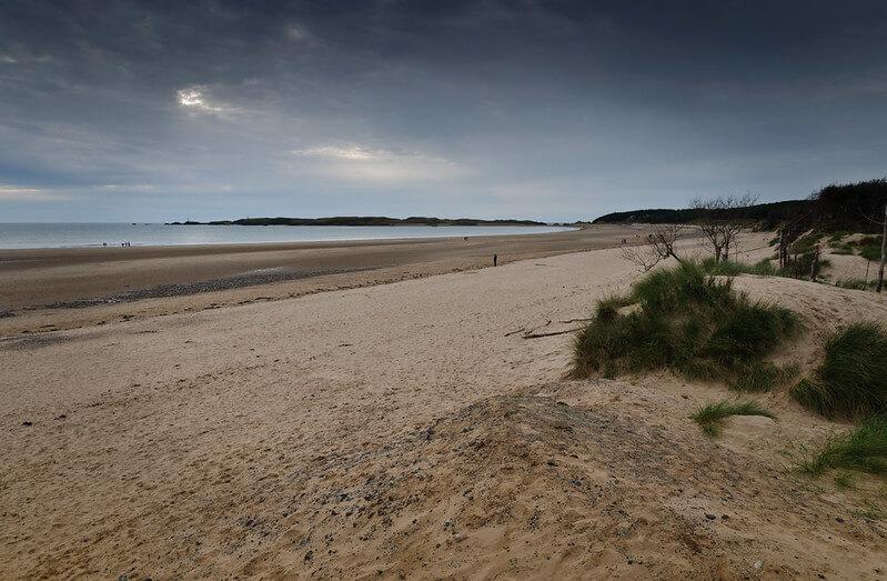 Newborough beach forest