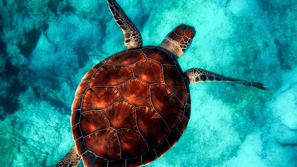 Koh Samet Diving Guide
